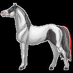 HWR Peppy :.Pixel.: by Buckaroo-Stock