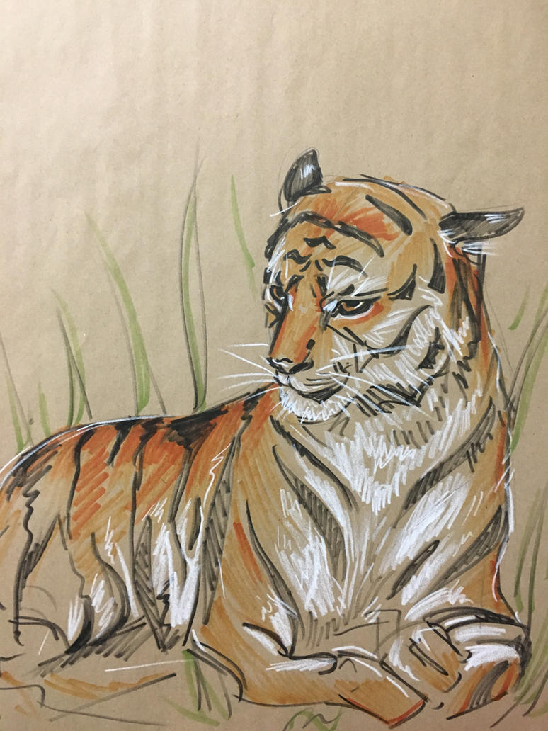 Tiger by 0torno