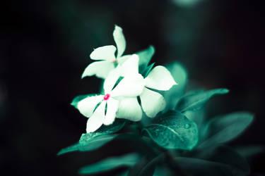 Delicate White by hiimlucifer