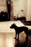 Small dog in shadow by Bobbwhy