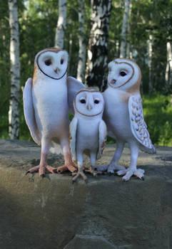 owl family..