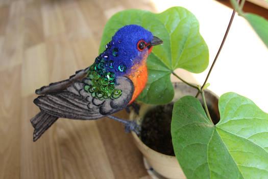 Colored bunting bird