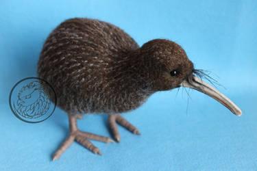 Kiwi bird 2 by Sillykoshka