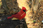 Red cardinal (Northern cardinal) 2