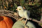 Chick (baby hen) 1