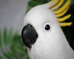 Yellow-crested cockatoo 1 by Sillykoshka