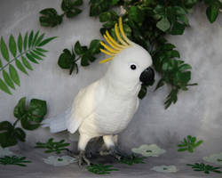 Yellow-crested cockatoo 4 by Sillykoshka