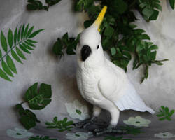 Yellow-crested cockatoo 5 by Sillykoshka