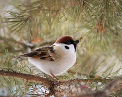 Tree sparrow 2 by Sillykoshka