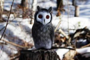 Nothern white-faced owl (Ptilopsis leucotis) 1 by Sillykoshka