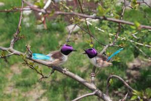Purple crowned wrens (males) 2 by Sillykoshka