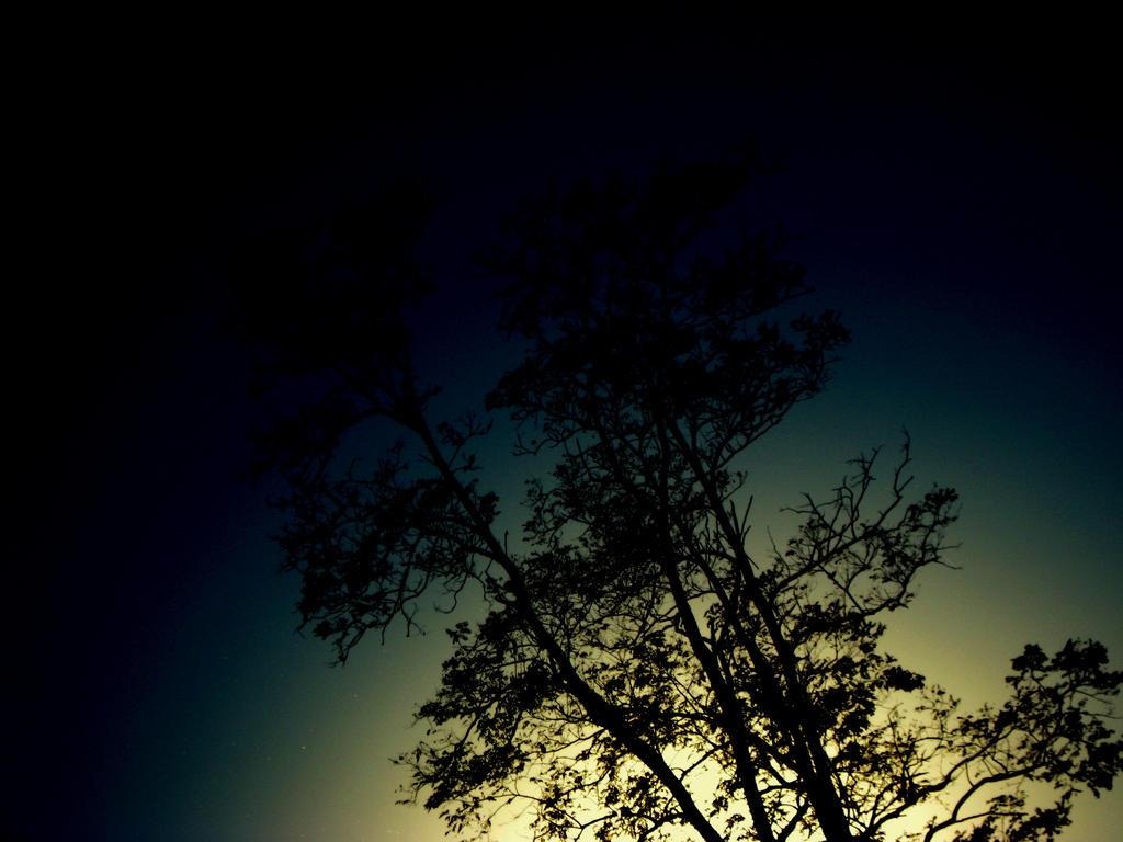 Trees Grow from Sunlight by xHermionexxxGrangerx