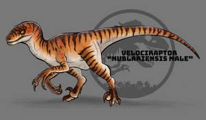 Jurassic Park: Velociraptor nublariensis male