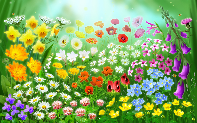 Spring Flowers Animation