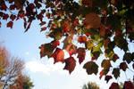 Fall Foliage 2007 10