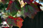 Fall Foliage 2007 11