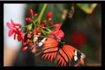 Butterfly 29