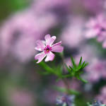 in love with a flower by jostef