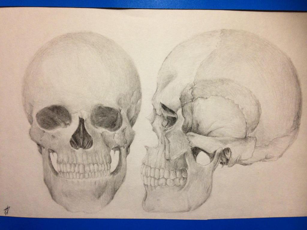 Skull by Karyogui
