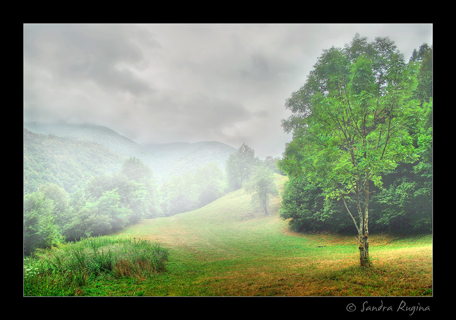Foggy meadow by Behindmyblueeyes