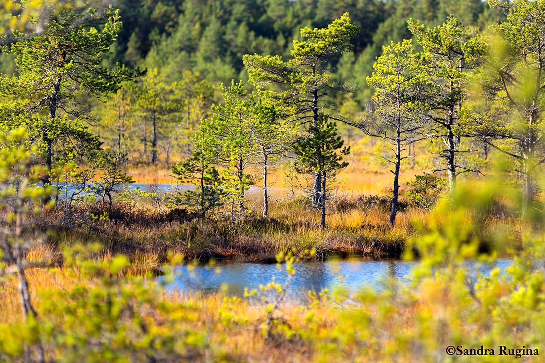 Estonia by Behindmyblueeyes