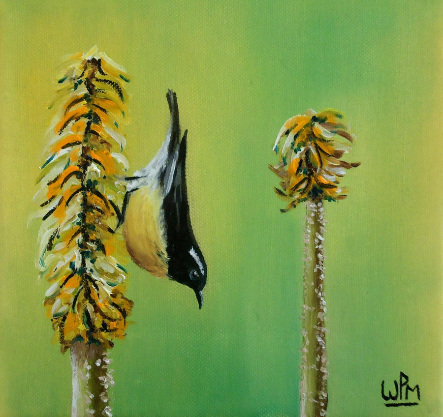 Bananaquit on an aloe flower by WendyMitchell