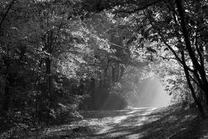 Forest by thegreeneye