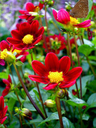 Red Flowers and butterfly... by thegreeneye