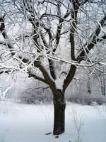 Frozen tree by thegreeneye