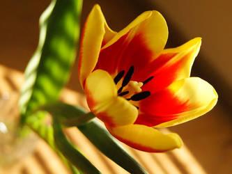 Warm flower by thegreeneye