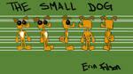 Small Dog Turnaround