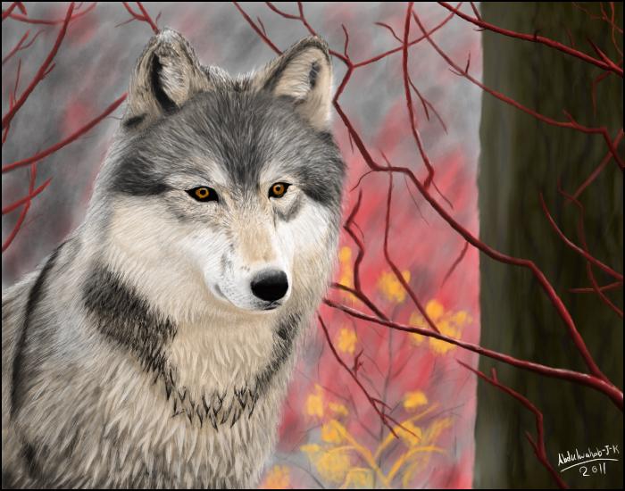 wolf by Abdulwahab-J-K