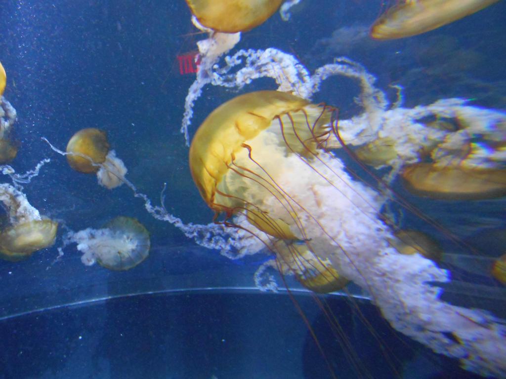 Aquarium - big league Jellyfish by Flo996