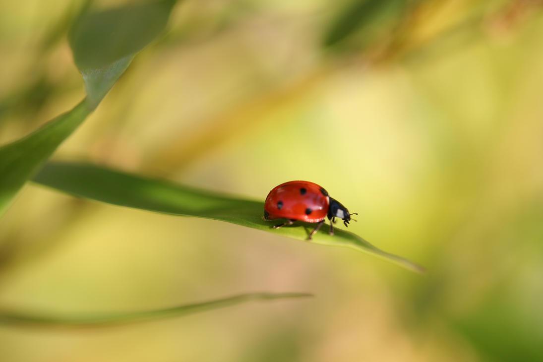Ladybug by Toefje-Kunst