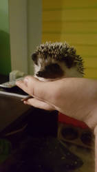 Liam the Hedgehog by pyrokar1990