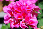 Pink Flowers by Altruistic-artist16