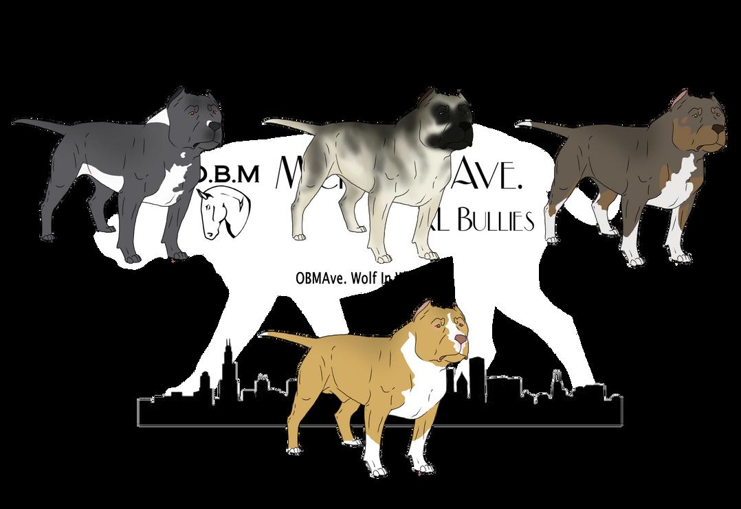 Dog Show Brace Class