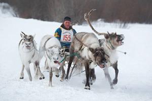 Reindeer Breeders' Day Celebrations