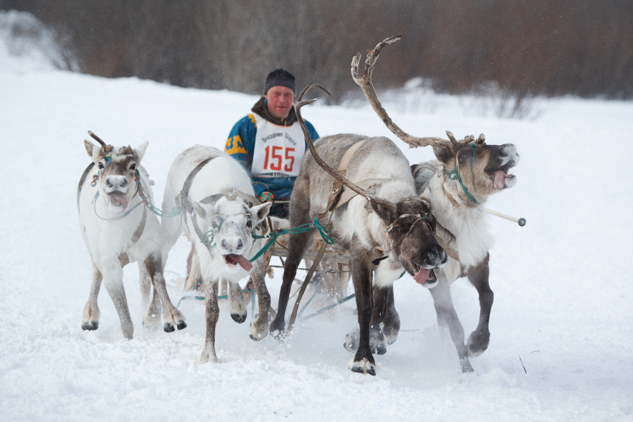 Reindeer Breeders' Day Celebrations by Ann-Rentgen