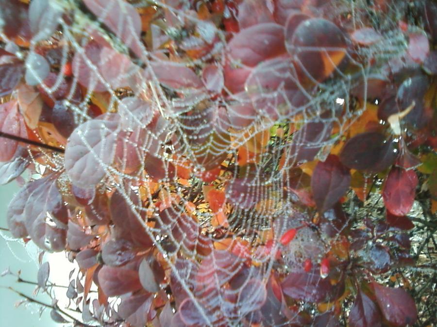 Morning Dew by callierosemoon