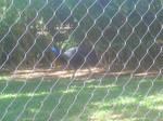 Literal Big Bird :ZT 2010: