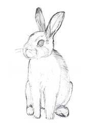 Rabbit sketch by Miss-Zut