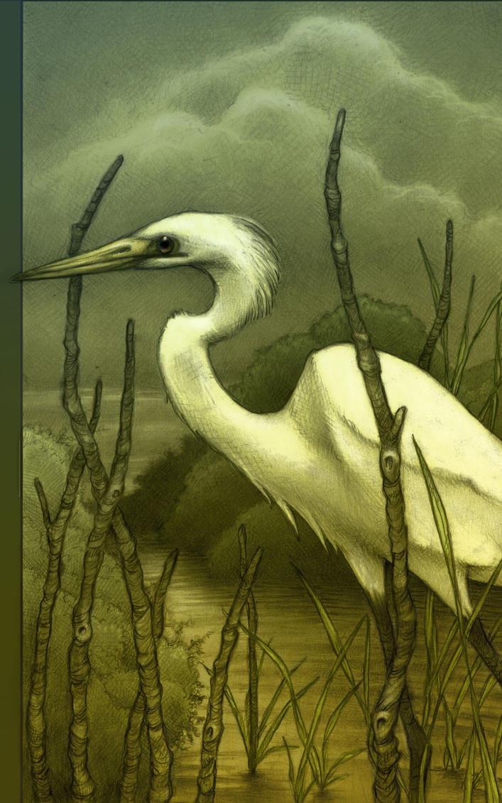 Egret by Tom Brown
