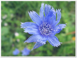 Shy Blue by BlueAnomiS