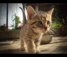 Little Tiger by BlueAnomiS