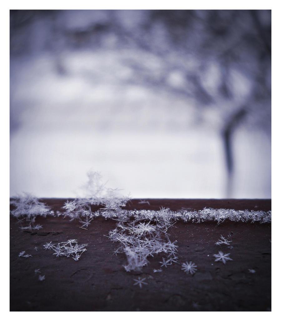 Tiny Wonders by BlueAnomiS
