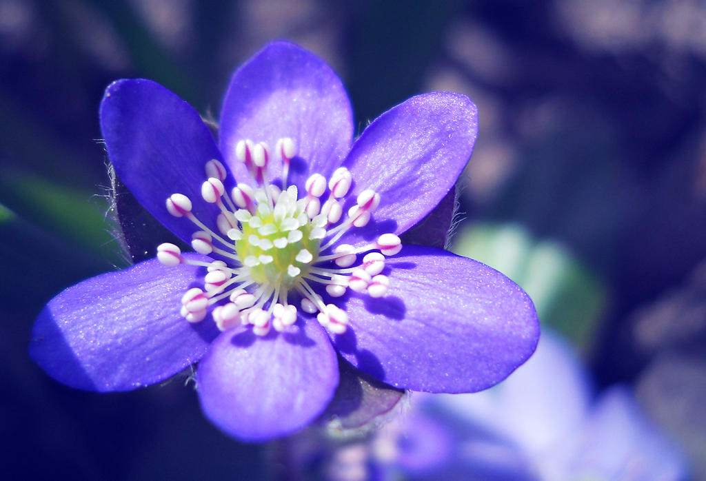 Wishing Star by BlueAnomiS
