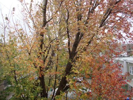 Three color tree
