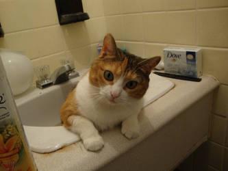 Lili's bathroom 1 0f 5
