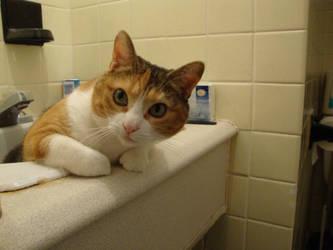 Lili's bathroom 4 0f 5